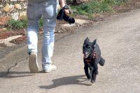 EDDYCAM Sling 2 with Olympus Dog Smilla + Victor